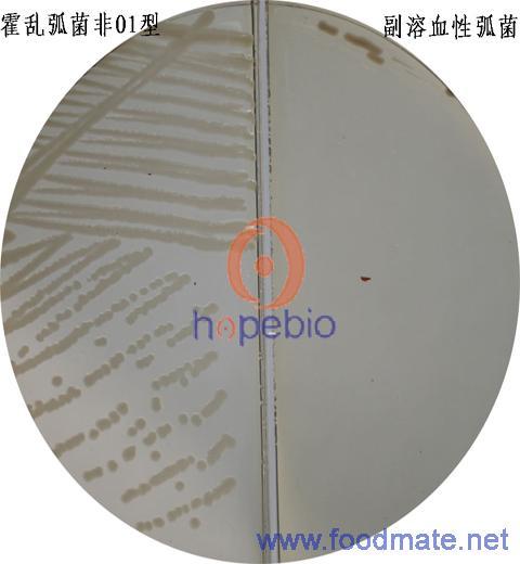 霍乱弧菌油镜手绘图